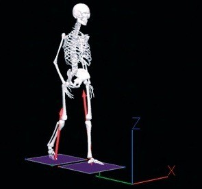 Biomechanical analysis, Gait Analysis, Motion capture system