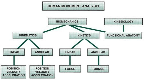 Human movement analysis, Biomechanics vs Kinesiology, Kinematics vs Kinetics