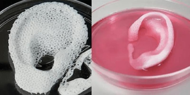 3D-printed-organs-3d-printing-medical-breakthrough