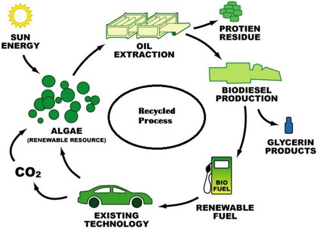 algae-biodiesel-recyclic-method-100recycled-products