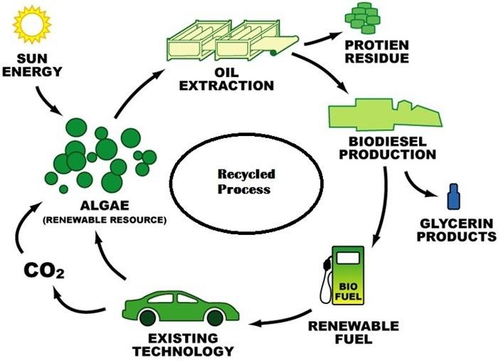 algae-biodiesel-recyclic-method-100recycled-products